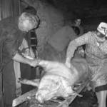 la matanza del chon