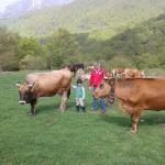 Bernardo y Martin con el ganado.